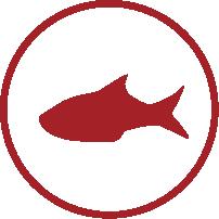 picto-poisson