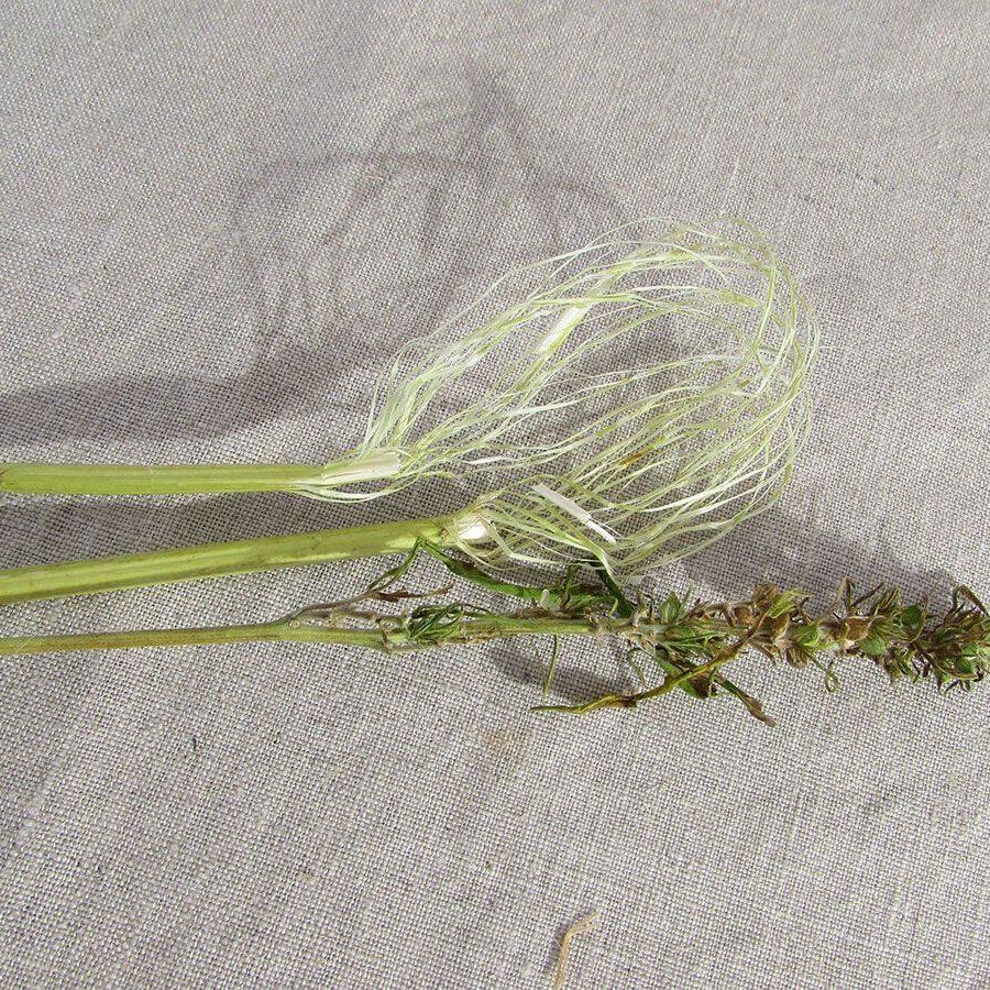 tige-fibre-chenevotte